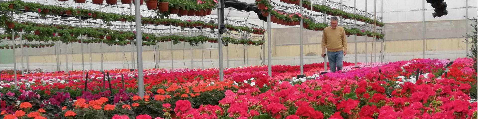Plantas de exterior y jardín